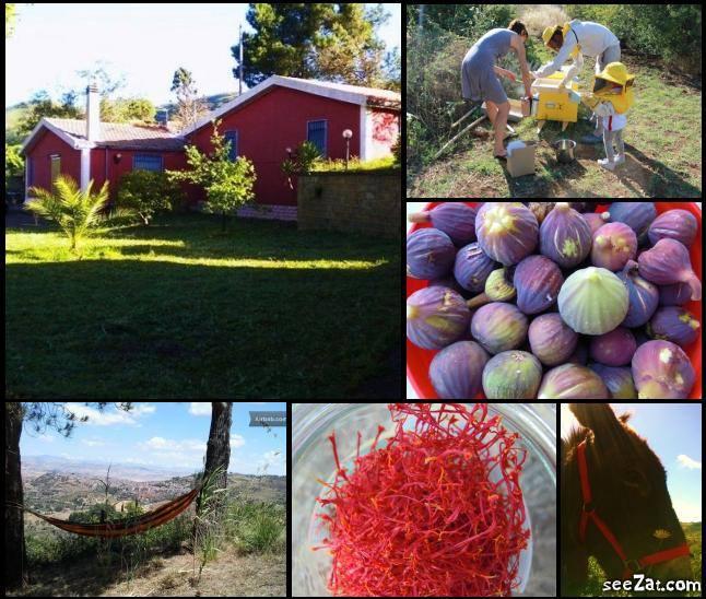 AgroCultura e ArcheNatura nel Cuore Verde della Sicilia