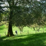 Camminare nel parco